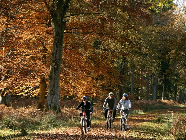 What to do in Buckinghamshire this half term