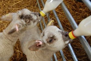 The Green Dragon Rare Breeds and Eco Centre