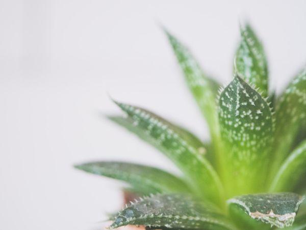 Cerus Botanical Designs