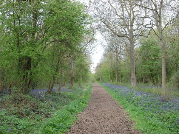Howe Park Wood North