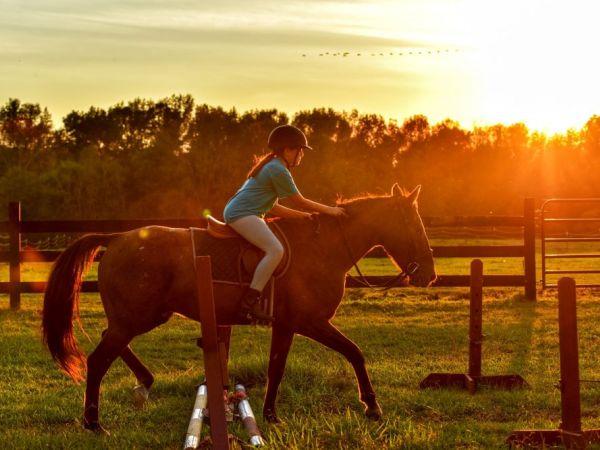 Horsewyse Pony Activity Days