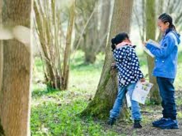 Stowe - Family explorers: Winter tree detectives