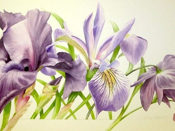 Woburn's Flower Painting Study Day