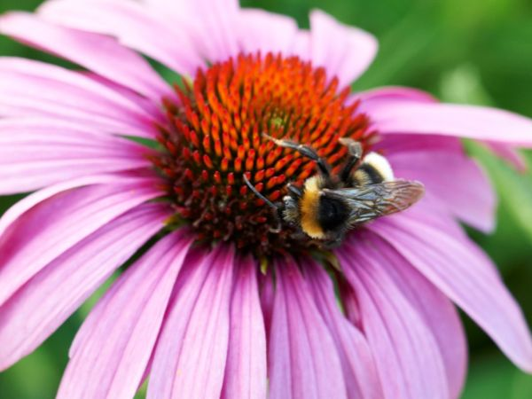 Woburn's Bee Walk