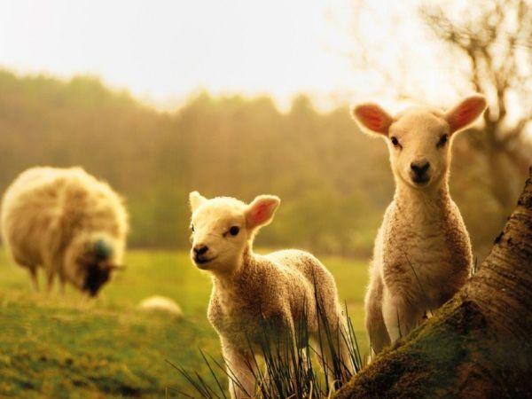 Spring Babies & Lambing at Green Dragon Eco Farm