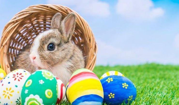 Easter Bunny's Picnic