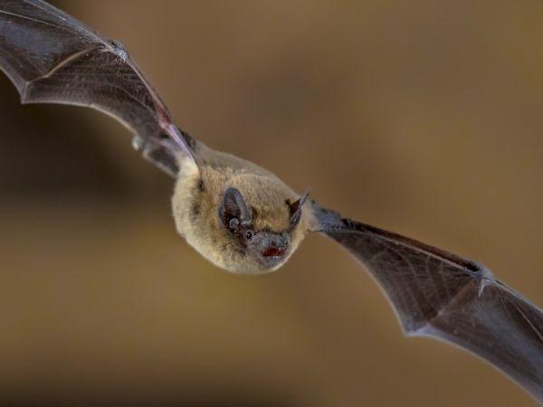 Bat Walk at Woburn Abbey