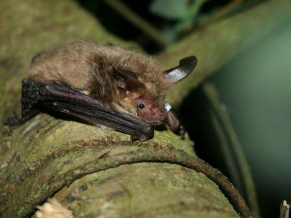 Waddesdon's Bat Walk