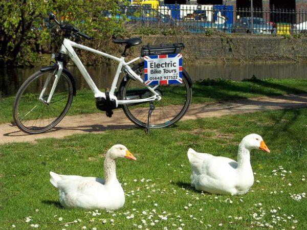Ashridge Electric Bike Tour
